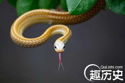 那些我们就称之美女蛇或者