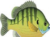 胎梦梦见鱼