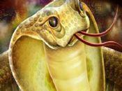 胎梦梦见蛇